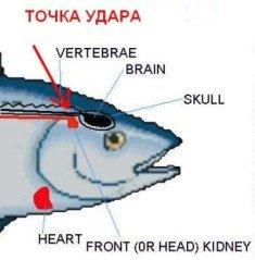 гуманизатор успокоитель рыбы